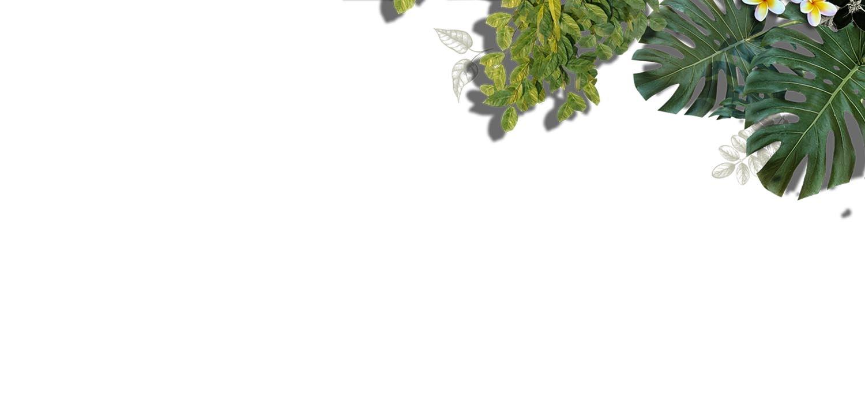 fondo-vegetación-superior